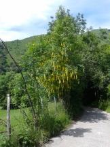Legambiente-AON-2016-65